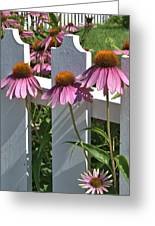 Echinacea And A White Picket Fence Greeting Card