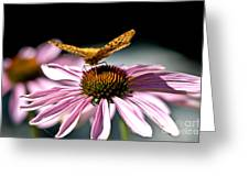 Echinacea And Friend Greeting Card