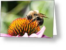 Echinacea Delight Greeting Card