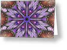 Echinacea Flower Mandala Greeting Card