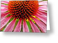 Echinacea Flower Upclose Filtered Greeting Card