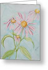 Echinacea Flowers 2012 Greeting Card