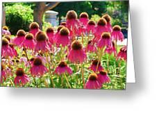 Echinacea Flowers Greeting Card