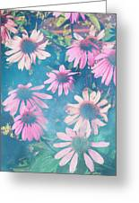 Echinacea Flowers Greeting Card