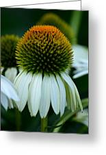 Echinacea Gold II Greeting Card