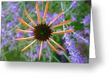 Echinacea Mango Greeting Card