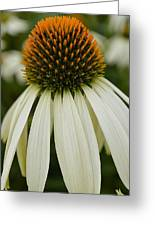 Echinacea Portrait Greeting Card