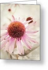 Echinacea Greeting Card by Priska Wettstein