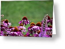 Echinacea Purpurea Greeting Card