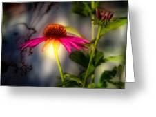 Echinacea Sunrise Greeting Card