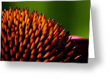 Echinacea Up Close Greeting Card