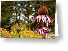 Echinacea With Bee Greeting Card