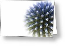 Echinops  Greeting Card
