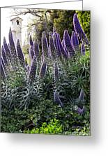 Echium And Tower Greeting Card