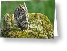 Echo Of An Eastern Screech Owl  Greeting Card