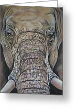 Echo Of The Elephants  Greeting Card
