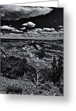 Echo Park From The Ridge Black And White Greeting Card