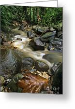 Edmond Forest Reserve On Saint Lucia Greeting Card