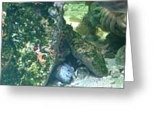 Eel Waiting To Snatch Something For Lunch Greeting Card