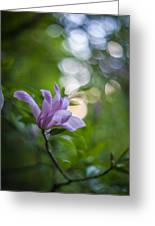 Effervescent Magnolia Greeting Card