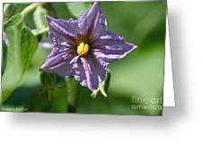 Egg Plant Blossom Greeting Card