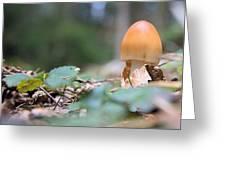 Egg Poppin Fungus Greeting Card