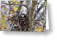 Eggstraordinary Greeting Card by Al Powell Photography USA