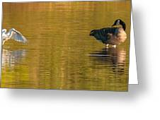 Egret And Canada Goose Greeting Card