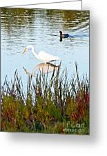 Egret And Coot In Autumn Greeting Card