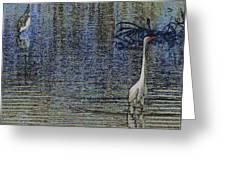 Egret And Heron Watching Greeting Card