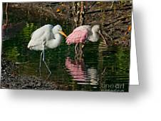 Egret And Pink Spoonbill Greeting Card