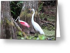 Egret And Spoonbill Greeting Card