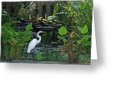 Egret At A Pond Greeting Card