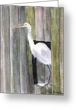 Egret At John's Pass Greeting Card