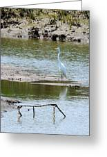 Egret At Low Tide Greeting Card