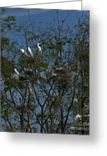 Egret Estuary   #6878 Greeting Card