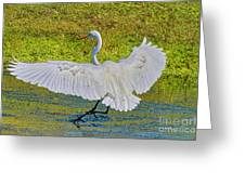 Egret Full Wing Span Greeting Card