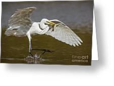 Egret Happy Dance...... Greeting Card