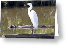 Egret Has A Lot To Say I Greeting Card