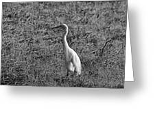 Egret In Black And White Greeting Card