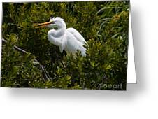 Egret In Bushes Greeting Card