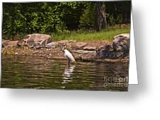 Egret In Central Park Greeting Card