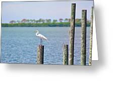 Egret In Dunedin Florida Greeting Card