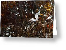 Egret In Hiding Greeting Card