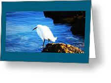 An Egret In St. Augustine Greeting Card