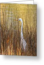 Egret In The Grass Greeting Card
