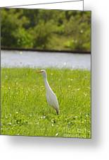 Egret On The Green-no2 Greeting Card