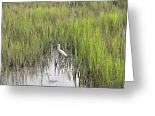 Egret In The Marsh Greeting Card