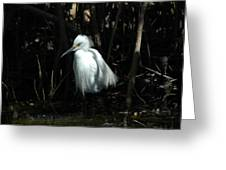Egret Of Sanibel 2 Greeting Card