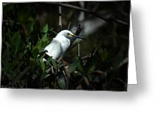 Egret Of Sanibel 5 Greeting Card